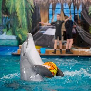 Дельфинарии, океанариумы Череповца