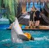 Дельфинарии, океанариумы в Череповце