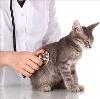 Ветеринарные клиники в Череповце